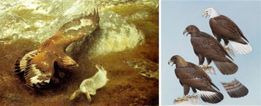 GoldenEagles