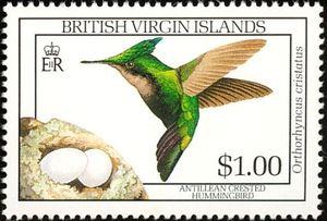 Antillean-Crested-Hummingbird-Orthorhyncus-cristatus