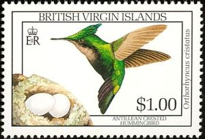 Antillean-Crested-Hummingbird-Orthorhyncus-cristatus